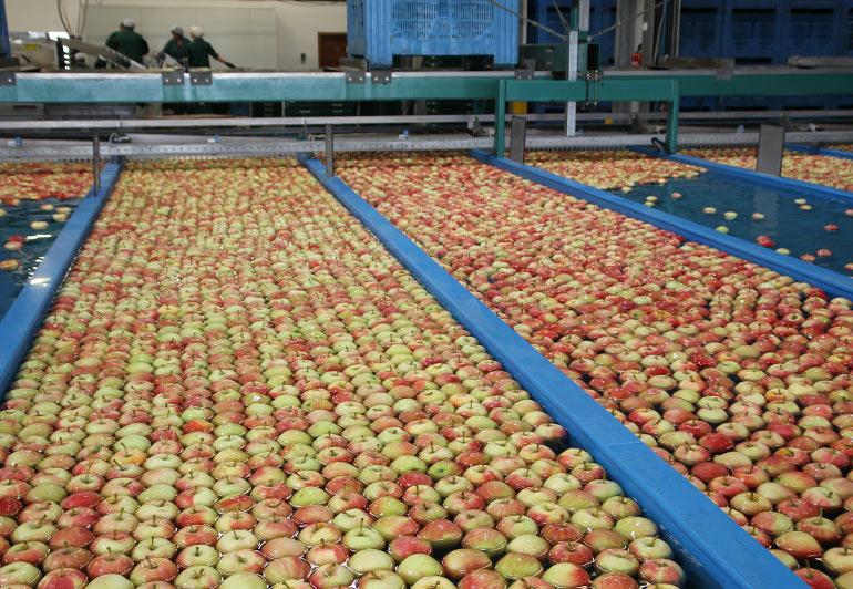 Apfel Lagern